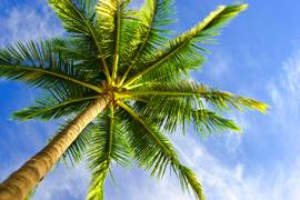 palmtree50p